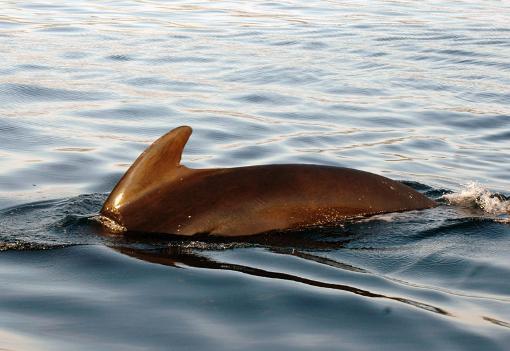 grind hval på nært hold